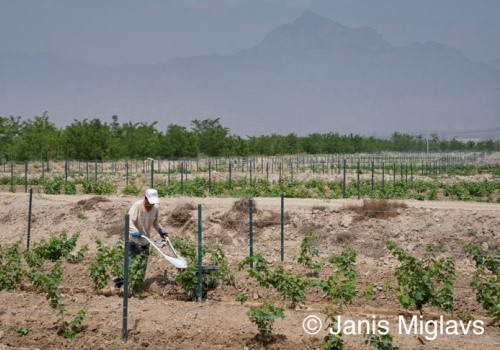 Ningxia Silver Heights Winery Janis Miglavs image